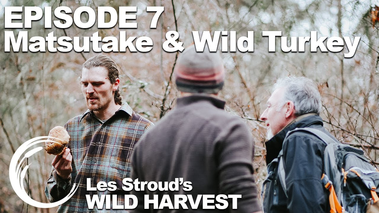 Download Survivorman   Les Stroud's Wild Harvest   Season 1   Episode 7   Matsutake & Wild Turkey