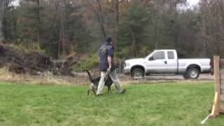 Scott Dunmore And His Dog, Dilly, Working On Heeling & Motion Exercises