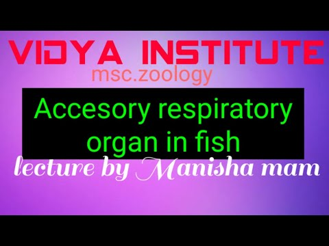 Accessory Respiratory Organ In Fish(msc.lecture)by M.R.mam