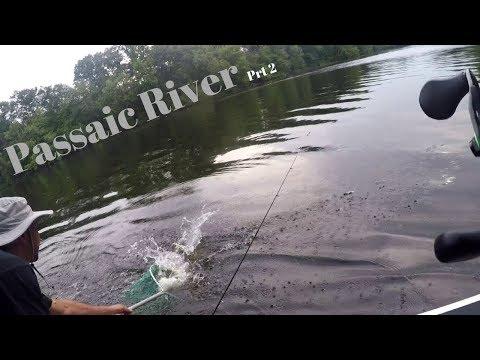 Caught My First Northern Pike!!! (Passaic River)