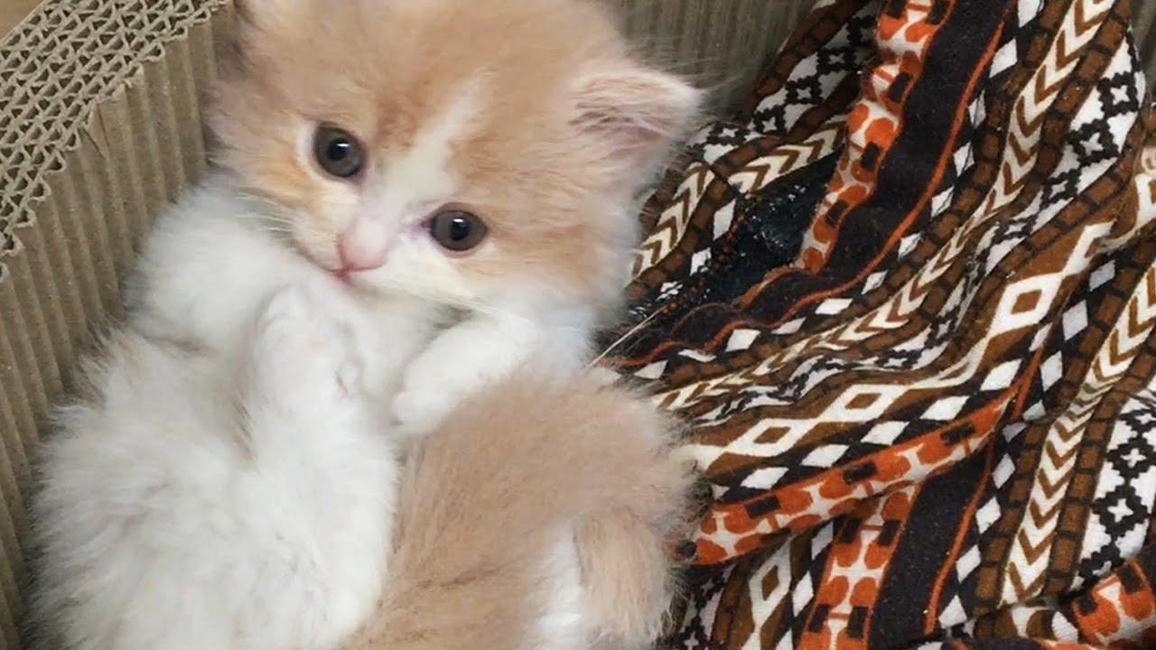 Download 어린 시절 가장 사랑스러운 고양이 디디