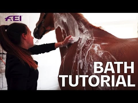 How to bath a Horse for a Dressage Show? Tutorial with Olivia Towers | Guest Vlog