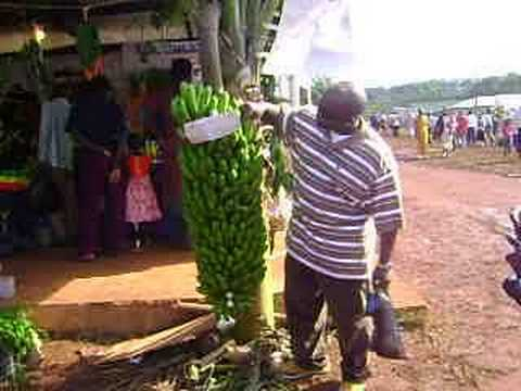 The 2008 Jinja Agriculture Show