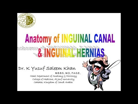 Anatomy of Anterior Abdominal Wall (Part 2) - INGUINAL CANAL & HERNIAS