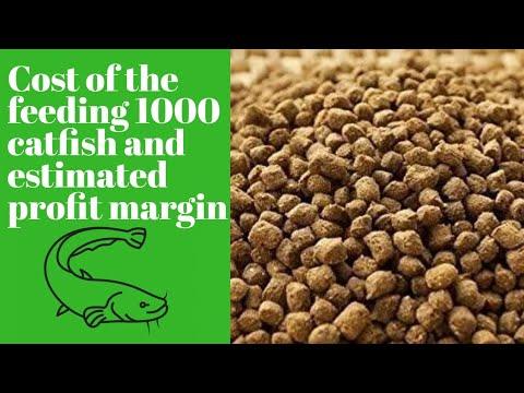 Cost of feeding 1K juveniles and Estimated profit margin in catfish farming #catfishfarm #feeding