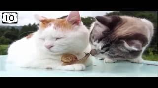 TOP 10 Śmieszne koty KOMPILACJA 2016 - NOWOŚĆ W HD! ŚMIESZNE FILMIKI