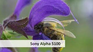 sony Alpha 5100 - DSLM im Test  #VTUrlaubsvertretung