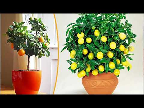 7 растений, которые идеально подойдут для детской комнаты