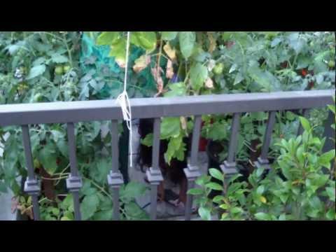 Natashia Garden Part 4