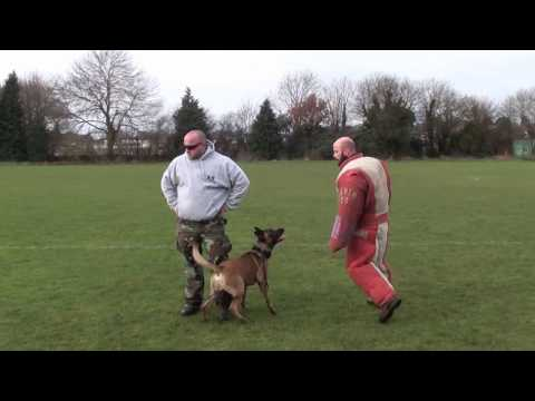 The one and only Milo 'The Machine' BRN 25823   handler close protection training