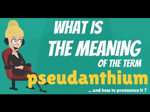 What is PSEUDANTHIUM? What does PSEUDANTHIUM mean? PSEUDANTHIUM meaning & explanation