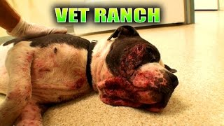 Abused, Neglected, Nearly Euthanized thumbnail