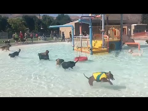 Adorable Puppy Pool Party