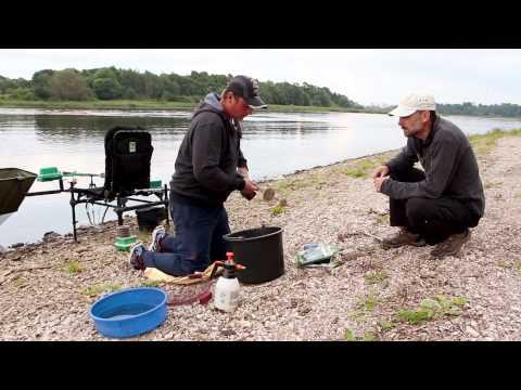 ловля налимов в псковской области