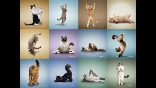Домашние животные, которые «занимаются йогой»