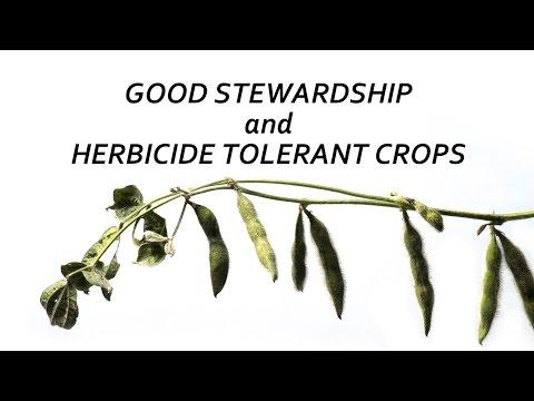 Good Stewardship and Herbicide Tolerant Crops