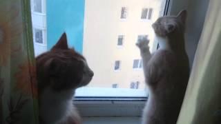 Наши рыжие коты-Тима и Кнопа