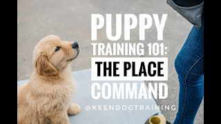 Puppy Training 101: The Place Command