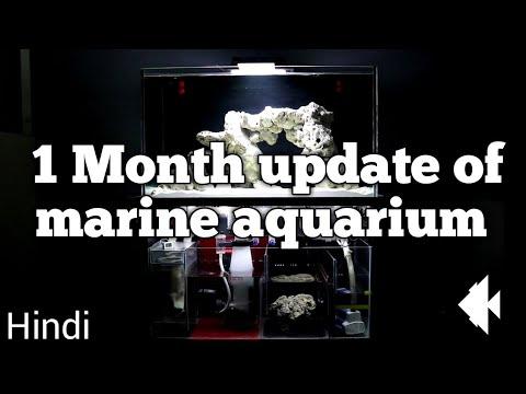 1 Month update of marine tank