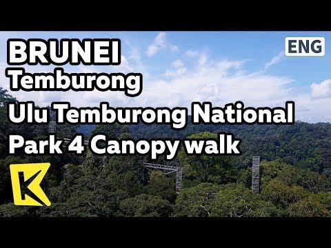 【K】Brunei Travel-Temburong[브루나이 여행-템부롱]울루 템부롱 국립공원 4 캐노피 워크/Ulu Temburong National Park/Canopy walk