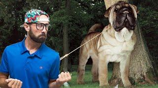 Top 10 τρομακτικά μεγάλα ΚΑΤΟΙΚΙΔΙΑ ΖΩΑ | Σκύλος που ζυγίζει έναν τόνο?!