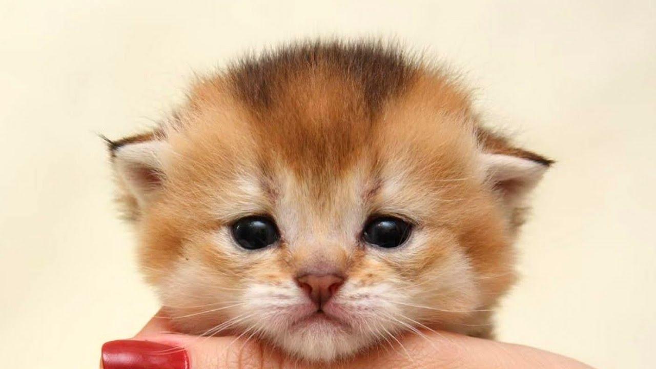 かわいい犬,猫,動物たちの癒しの画像集 Cute Animals,Dogs,Cats 04