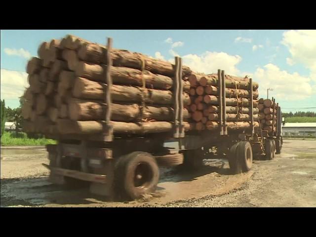 Reserva Mapuche vs. Industrias forestales - CHL - AFP / Ciencia / NCC 26 / 12.02.18