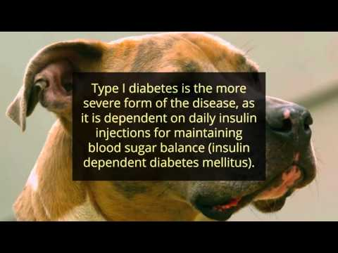 Diabetes In Dogs - Healt Natural