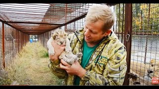 СПАСЕНИЕ  ЛЬВЕНКА !!! Четвертая часть.23-летняя львица родила львенка в Саванне! Тайган .Крым .
