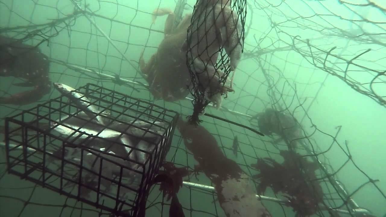Half Moon Bay Kayak Fishing for Dungeness Crab Ep  2