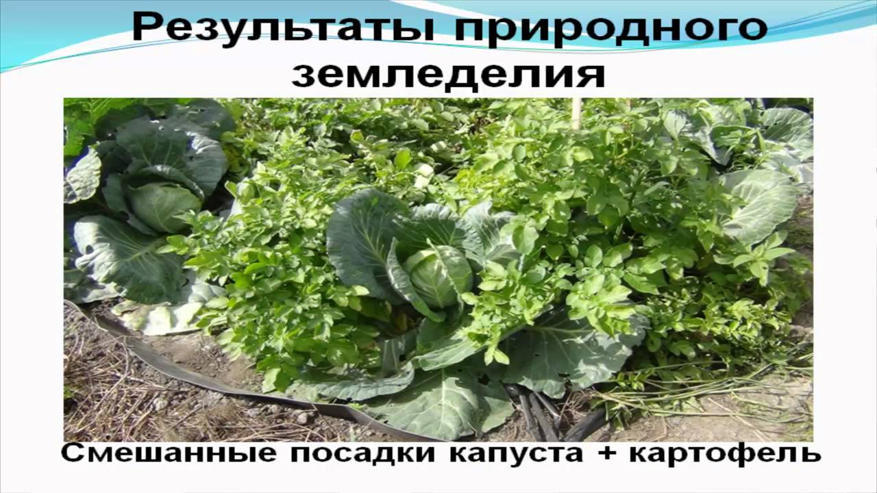 Природное земледелие на садовом участке практика