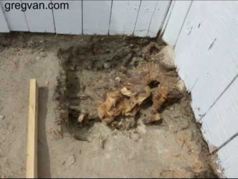 How I Removed Tree Roots Growing Underneath My Concrete Footing – Building Repair Tips