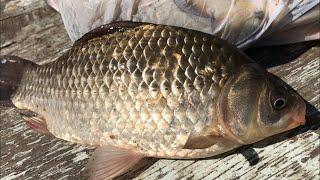 Фидерная рыбалка на карася | рыбалка на фидер для начинающих | ловля карася на фидер | рыбалка 2020