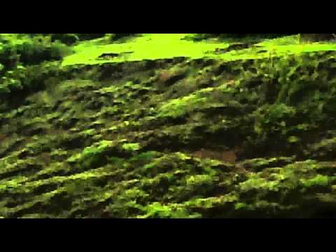 land suitable for rubber plantations
