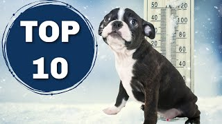 10 Things Boston Terriers ABSOLUTELY Hate!!!