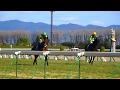 サトノケンシロウ(武豊)の馬場入場と返し馬。稲荷特別。京都競馬場、現地映像。