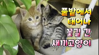 풑밭에서 태어나 꽃길로 간 새끼고양이 남매