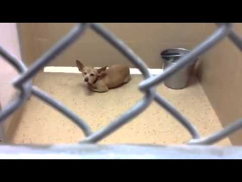 Dogs in the brownsville tx shelter january 2013