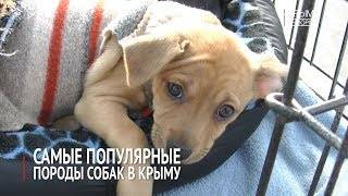 Самые популярные породы собак в Крыму