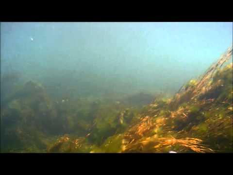 Подводная прогулка озеро Кенон Чита