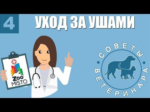 Болезни кроликов и их лечение - описание симптомов (+фото)
