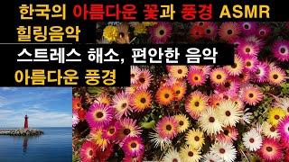 한국의 아름다운 꽃과 풍경 영상 ASMR/Beautif…