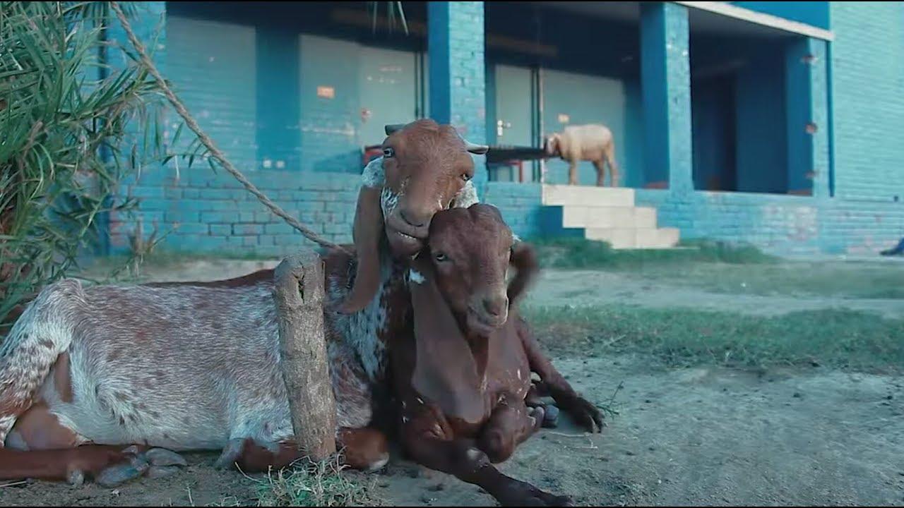 فيديو مضحك عيد مبارك Eid mubarak humorous