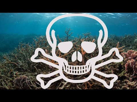 Oceans are losing oxygen; US creates world's largest marine reserve off Hawaii - Compilation