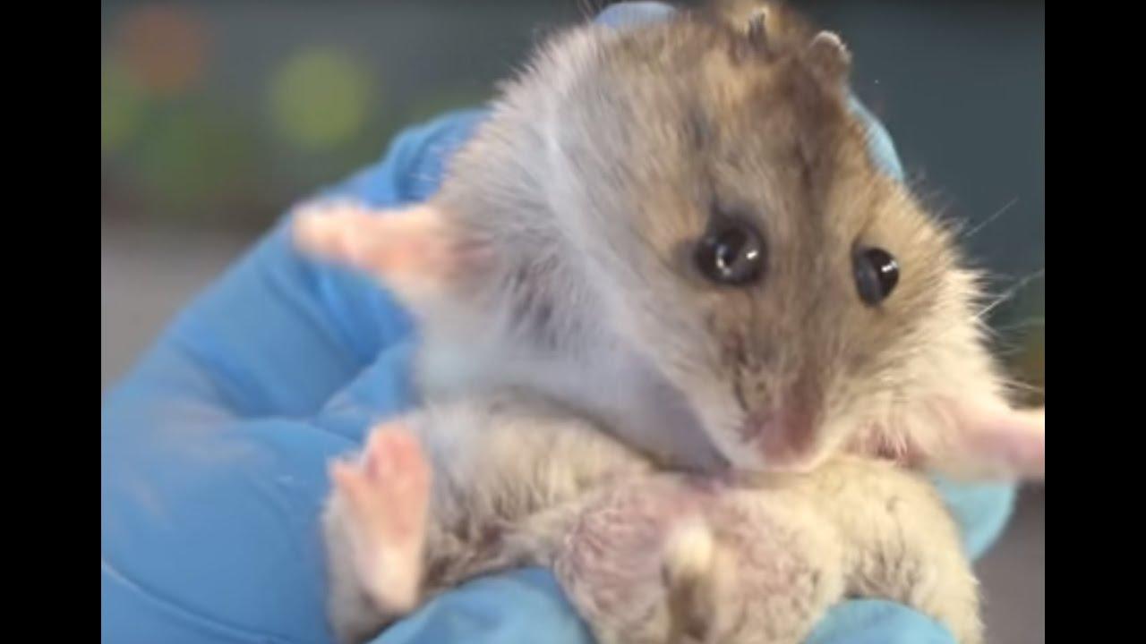 Videos de sexo hamster