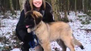 3 Counties Dog Training.avi