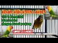 Kenari Isian Full Lovebird  Mp3 - Mp4 Download