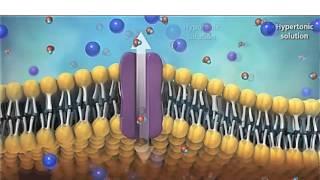 Мембрана клетки и транспорт через