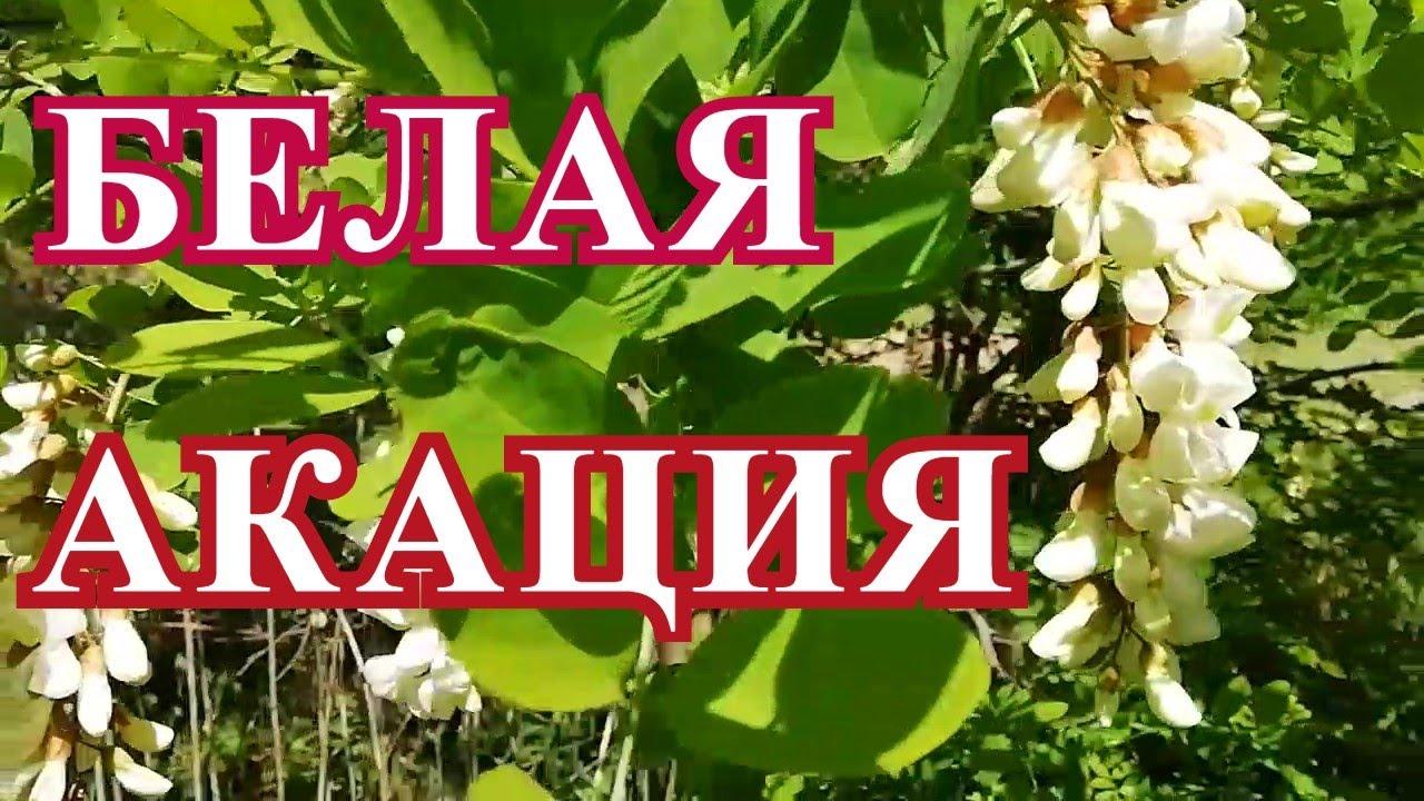 гастрит гипертония — Министерство Чеченской Республики по ...