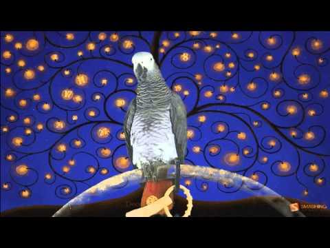 Watch the Birdie  - African Grey Parrot